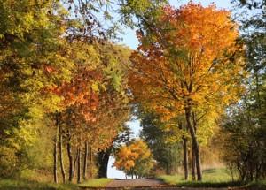 Altdarscheider Straße im Herbst